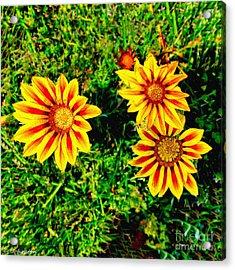 Flowers Thousand Trails  Acrylic Print by Bob and Nadine Johnston