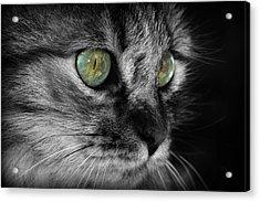 Fluffy Acrylic Print by Barb Gabay