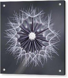 Fluffy Sun - S99b Acrylic Print by Variance Collections