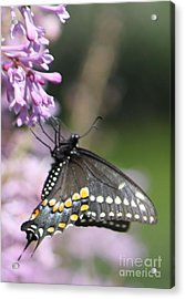 Flutter Bye Acrylic Print by French Toast