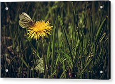 Fluttered By Acrylic Print by Chris Fletcher