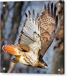 Fly Away Acrylic Print by Bill Wakeley