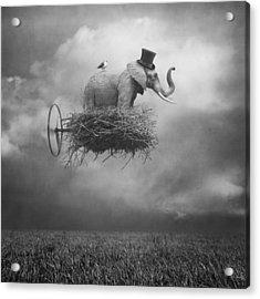 Fly Acrylic Print by Beata Bieniak
