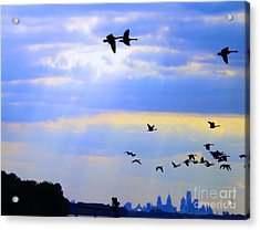 Fly Like The Wind Acrylic Print by Robyn King