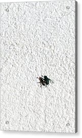 Fly On A Wall Acrylic Print by Alexander Senin