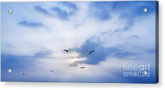 Fly To Freedom Acrylic Print by Setsiri Silapasuwanchai
