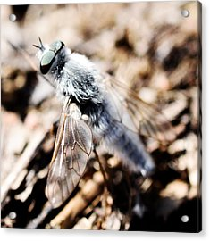 Fly Acrylic Print by Toppart Sweden