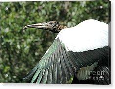 Flying Stork Acrylic Print by Theresa Willingham