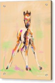 Foal Cute Fellow Acrylic Print by Go Van Kampen