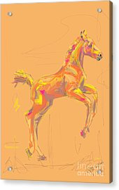 Foal Out And About Acrylic Print by Go Van Kampen