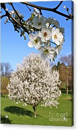 Focus On Spring Acrylic Print by Jay Nodianos