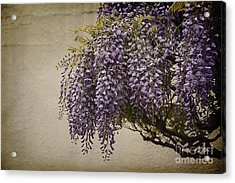 Focus On Wisteria Acrylic Print by Terry Rowe