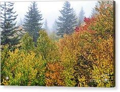 Fog Fall Day Acrylic Print by Thomas R Fletcher