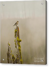 Foggy Friend Acrylic Print by Birches Photography