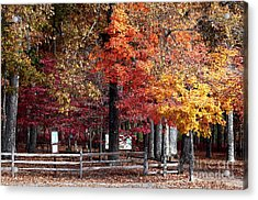 Foliage Colors Acrylic Print by John Rizzuto