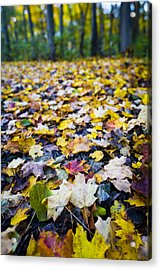 Foliage Acrylic Print by Sebastian Musial