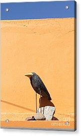 Folk Art Crow Todos Santos Acrylic Print by Linda Queally