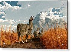 Follow The Llama Acrylic Print by Daniel Eskridge