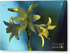 For All Woman In The World Acrylic Print by Odon Czintos