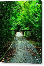 Forest Entrance Acrylic Print by Ester  Rogers