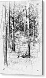 Forest In Winter Acrylic Print by Tom Mc Nemar