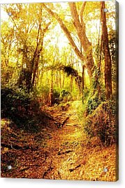 Forest Acrylic Print by Kristin Smith