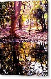 Forest Reflection Acrylic Print by Deepti Chahar