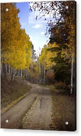 Forest Road In Autumn Acrylic Print by Ellen Heaverlo