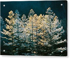 Forest Trees With Sunlight At Sunrise Acrylic Print by Panoramic Images
