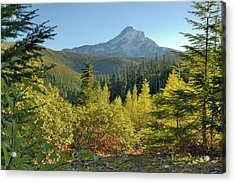 Forest View Acrylic Print by Arthur Fix