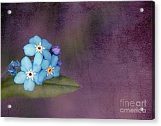Forget Me Not 02 - S0304bt02b Acrylic Print by Variance Collections