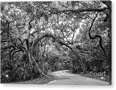 Fort Clinch Live Oaks Acrylic Print by Dawna  Moore Photography