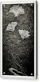 Fossilized Flowers Acrylic Print by Dan Sproul
