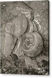 Fossilized Shell - B And W Acrylic Print by Klara Acel