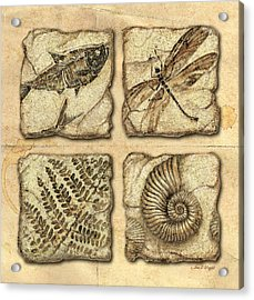 Fossils Acrylic Print by JQ Licensing