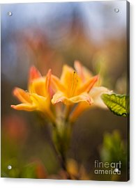 Fountain Of Gold Acrylic Print by Mike Reid