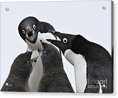 Four Penguins Acrylic Print by Carol Walker