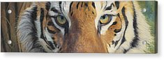 Forever Wild Acrylic Print by Lucie Bilodeau