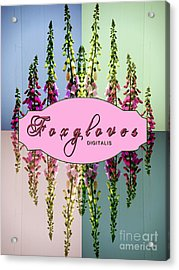 Foxgloves Times 4 Acrylic Print by Margaret Newcomb
