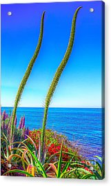 Foxtails On The Pacific Acrylic Print by Jim Carrell