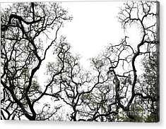 Fractal Branches Acrylic Print by Theresa Willingham