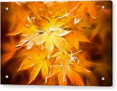 Fractal Gold 6664 Acrylic Print by Timothy Bischoff