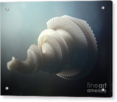 Fractal Seashell  Acrylic Print by Pixel  Chimp