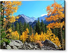 Framed In Gold Acrylic Print by Tranquil Light  Photography