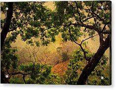 Framing Tree Branches Acrylic Print by Jenny Rainbow