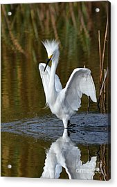 Frazzled Acrylic Print by Kathy Baccari