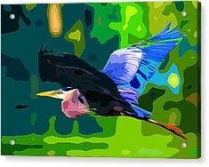 Free Bird 2 Acrylic Print by Brian Stevens