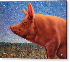 Free Range Pig Acrylic Print by James W Johnson