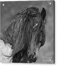 Freedom Close Up Acrylic Print by Carol Walker