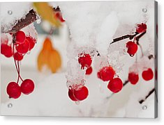 Fresh Colors In The Snow Acrylic Print by Southwindow Eugenia Rey-Guerra